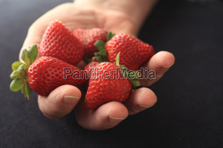 fresh ripe strawberries held by man