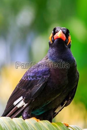 flug tier vogel wild schwarze schwarz