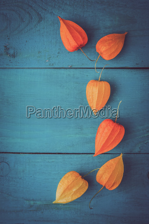 orange physalis on the wooden