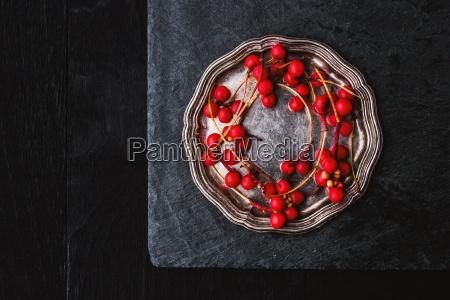 red berries sprig in the vintage