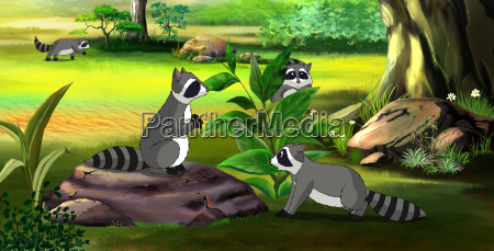 family of raccoons in the spring