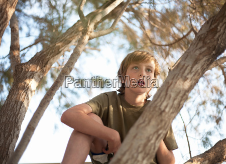 boy looking out from branches of