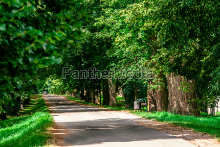 green summer trees in alley in