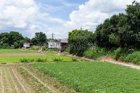 green field in countryside