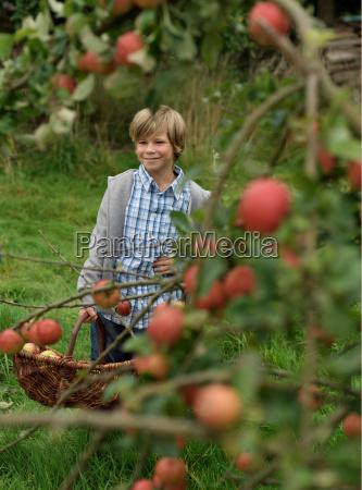 boy picking apples at harvest time