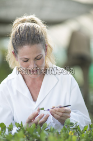 female scientist monitoring plant samples in