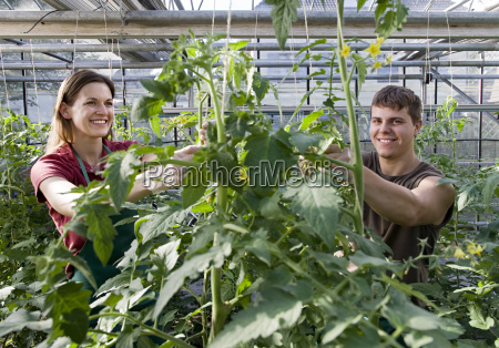 woman man caring for tomato plant