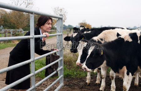 business woman with cows