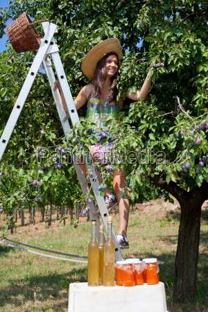 woman picking fruit from tree in
