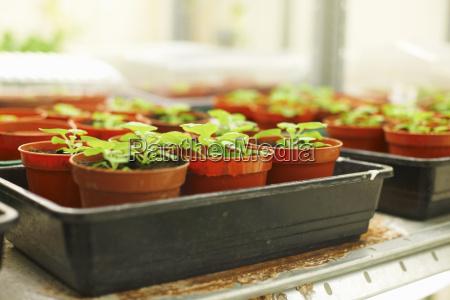 trays of plants in scientific laboratory