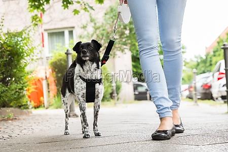 frau die mit ihrem hund