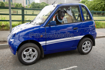 dog panting in electric car