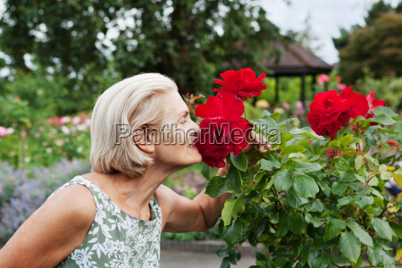 woman smells red rose in rose
