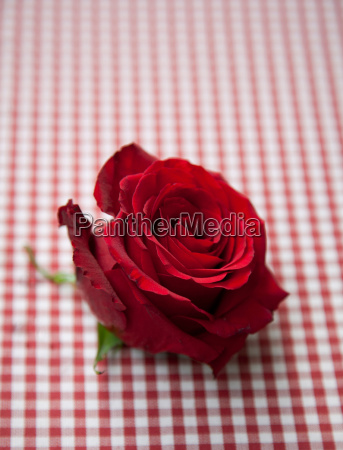 red rose on check tablecloth