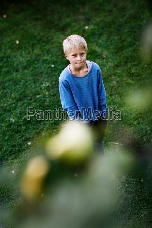 boy admiring fruit in tree