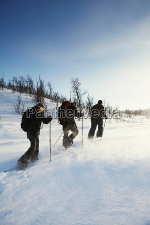 cross country skiers walking in snow