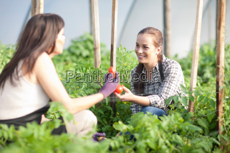 women working at vegetable farm holding