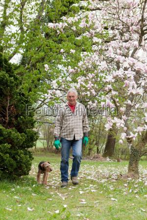 older man walking his dog
