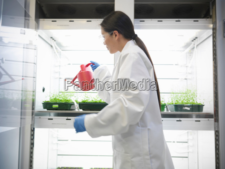 scientist watering plant cultures in incubator