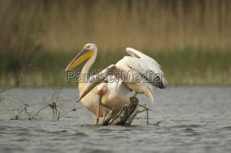 vogel stehend wildlife balance harmonie ausgewogenheit