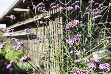 garten blume pflanze gewaechs sommer sommerlich