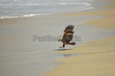 tier vogel braun braeunlich bruenett strand