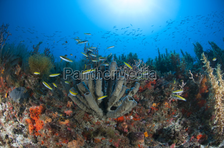 underwater view of fish swimming at
