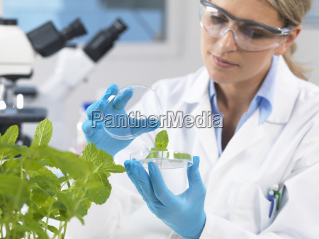 scientist viewing development of experimental plants