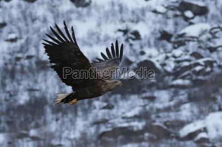fahrt reisen winter tier vogel norwegen