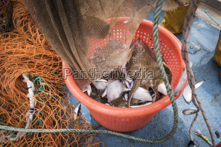 sample catch of fish on deck