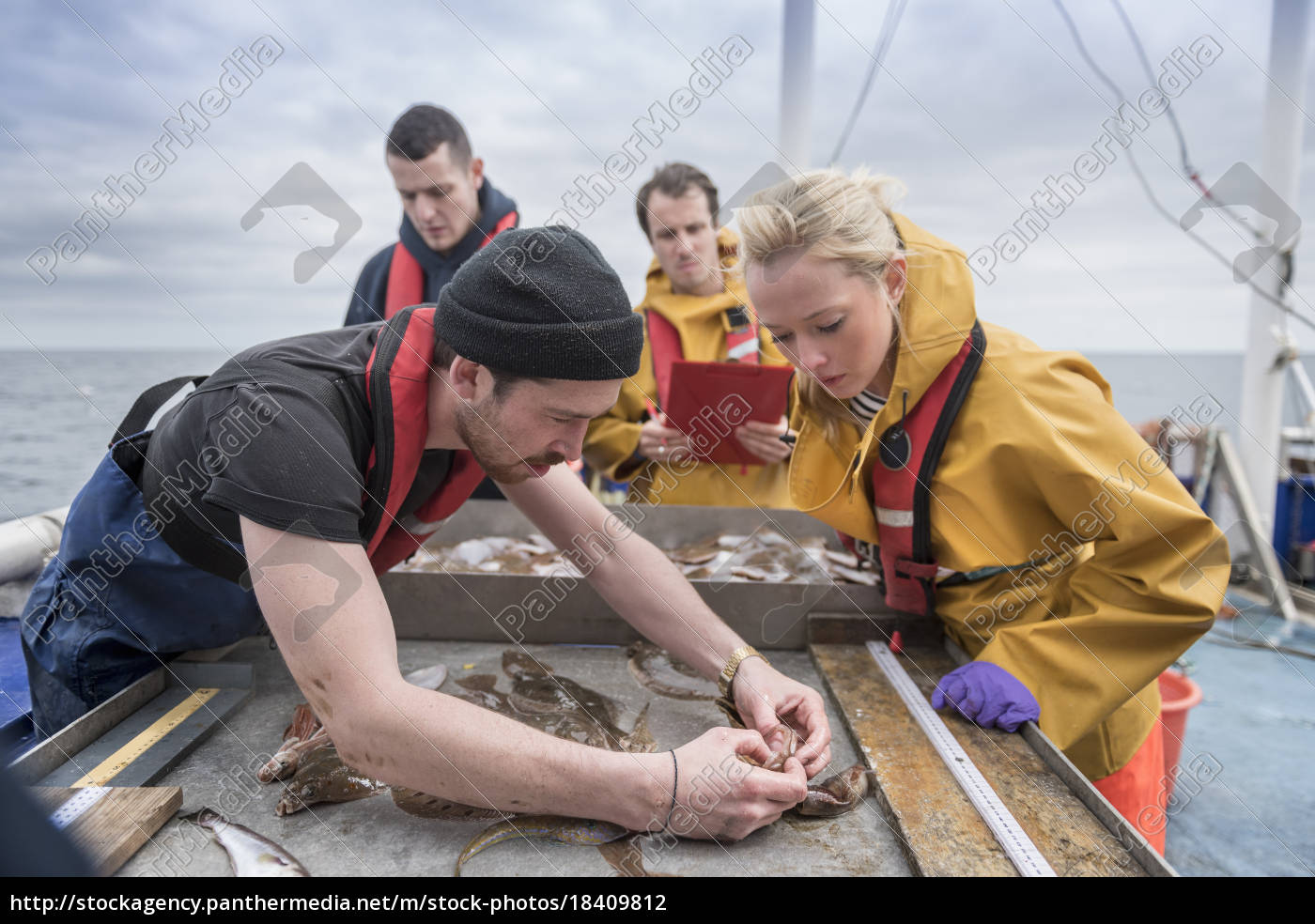 research, scientists, inspecting, fish, on, research - 18409812