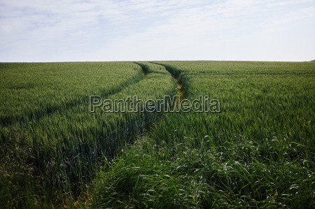 anhoehe huegel landwirtschaft ackerbau sommer sommerlich