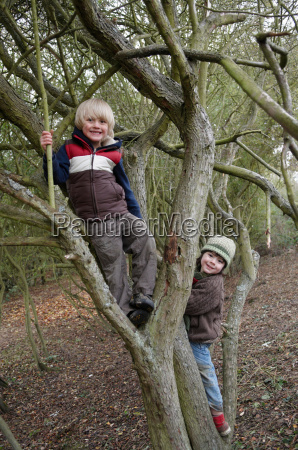 boys climbing on tree branches