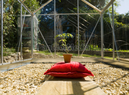 plant on green cushion in greenhouse