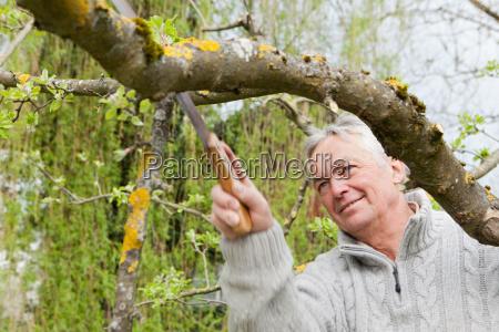 older man trimming tree in backyard