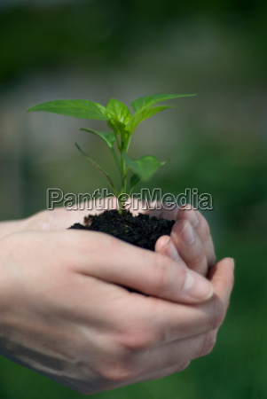 woman holding plant in soil