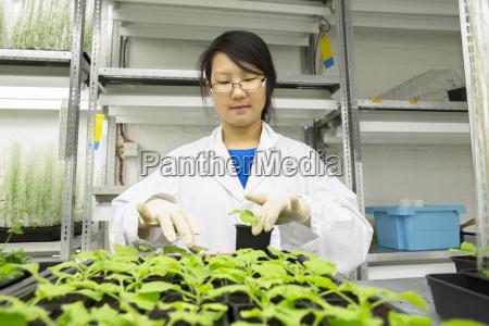 female scientist selecting plant sample in