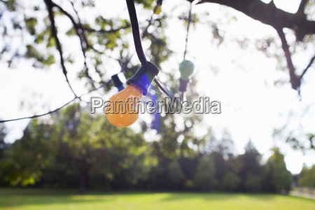 decorative lights hanging from tree branch