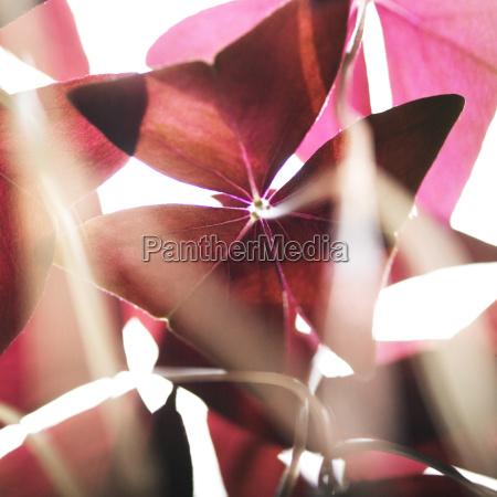close up of sunlit red triangular