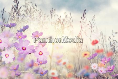 wildblumen bei sonnenuntergang