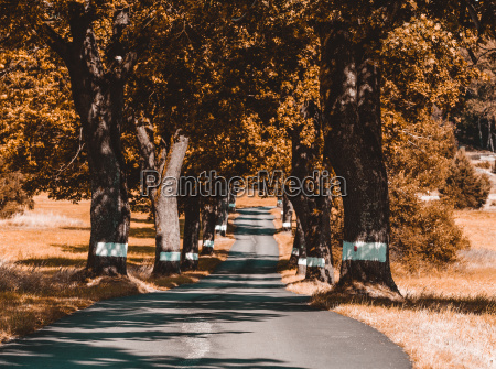 trees in alley in countryside