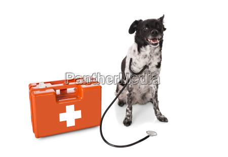 dog with stethoscope and first aid