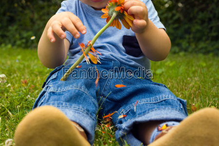 baby boy picking petals off a