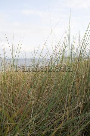 grass by coast