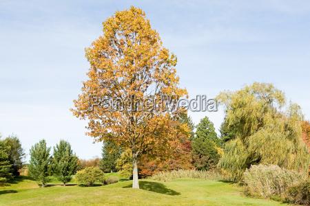a park in autumn
