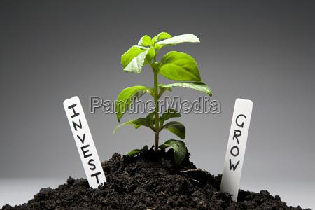 baeumchen mit investment etiketten