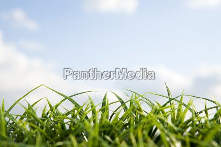 close up of grass and sky
