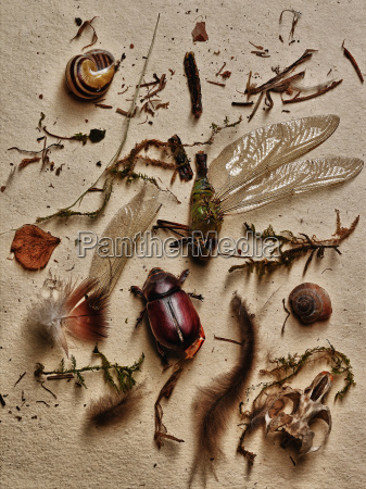 stilleben blad makrooptagelse naerbillede dod dyr