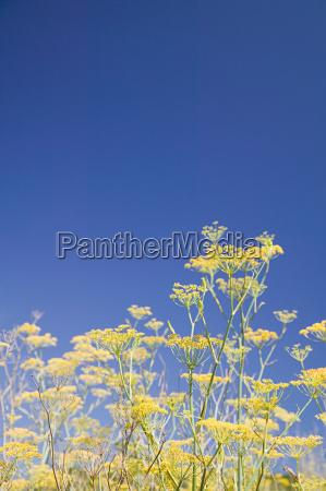 blume pflanze gewaechs wild outdoor freiluft
