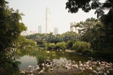 kowloon park hong kong